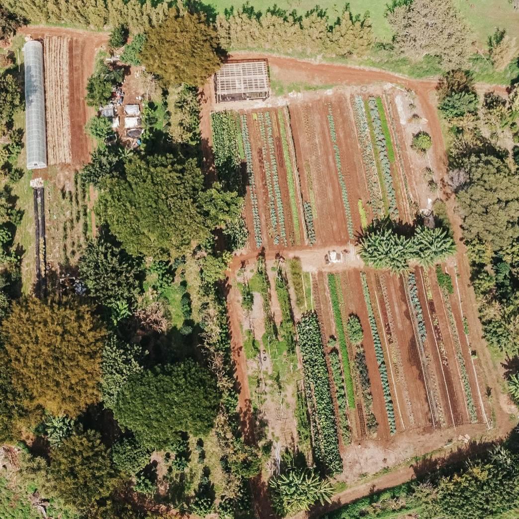 Birds eye view of farm